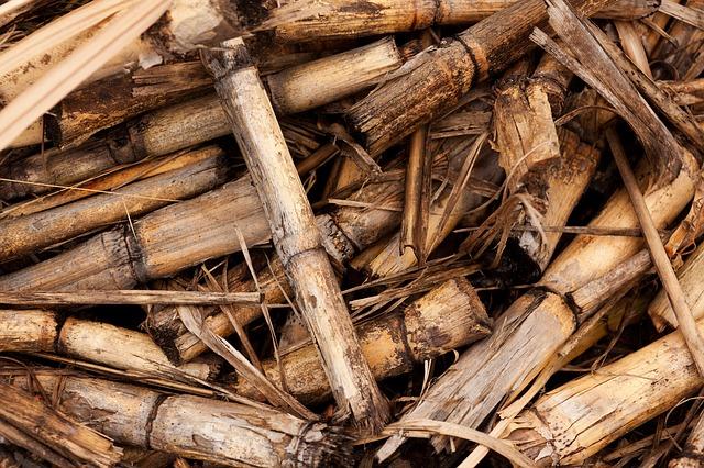 Ricavare Energia pulita dalla Biomassa