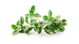 Timo limone, erba aromatica dalle caratteristiche green: tutti gli usi